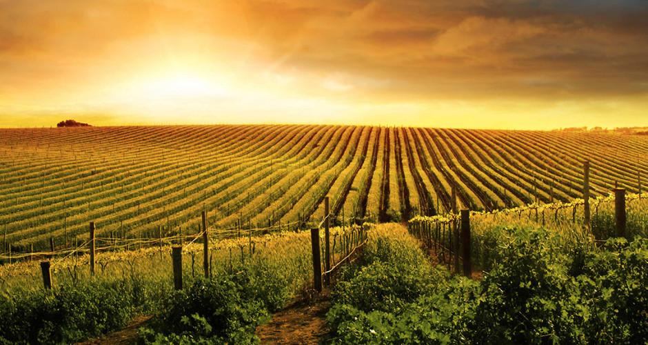 Disegno di legge sul consumo del suolo: le osservazioni della Commissione Cultura