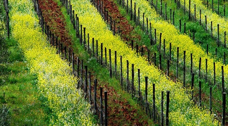Agroalimentare, città bio e Art Bonus